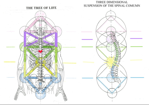 TREE OF LIFE WITH SPINE