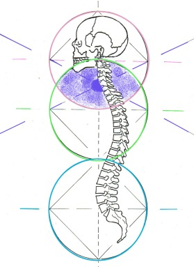 Spine with head and three circles