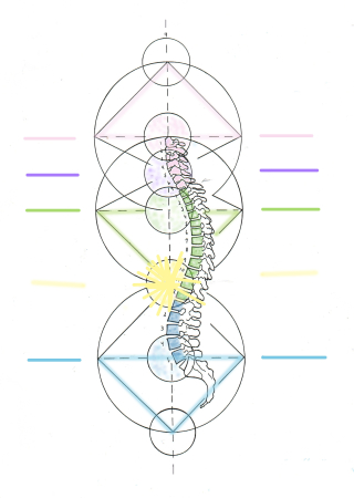 💞Side view of spine